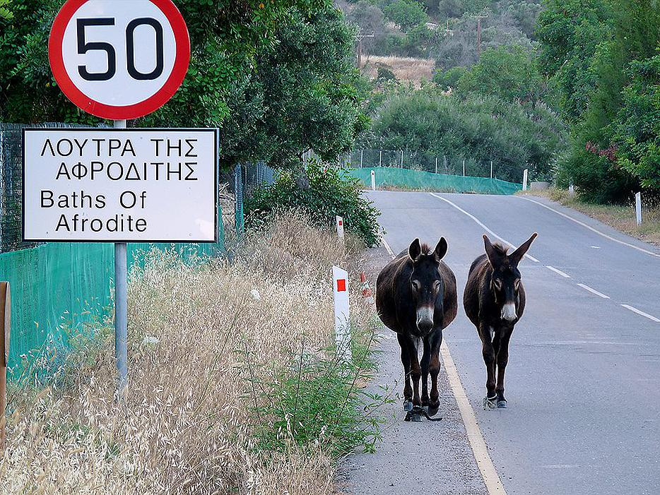 Go-for-a-donkey-ride-at-the-Baths-of-Aphrodite