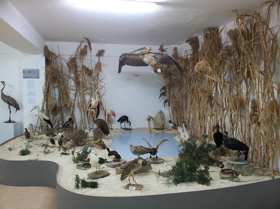Pomos-Natural-History-Museum